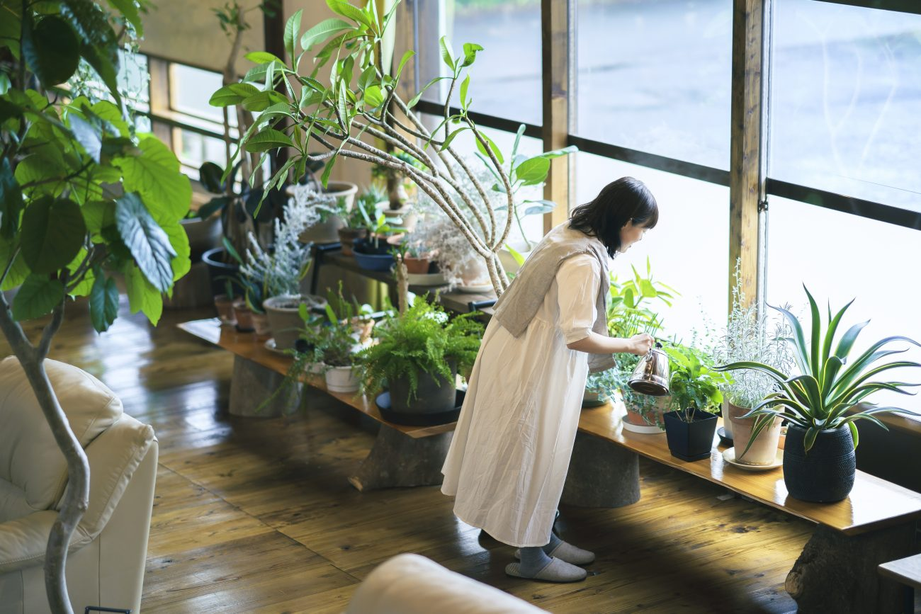 リビングルームにおすすめ観葉植物の選び方 【空間に彩りを与えるポイント】の画像